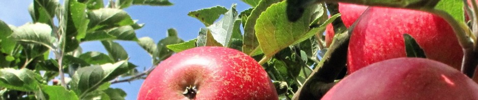 Apples OV main Comp1